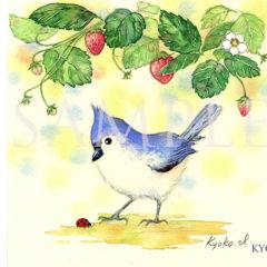 小鳥ちゃん